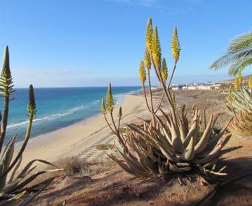 Landausflüge auf Fuerteventura: Malerisches Dünenpanorama auf Fuerteventura